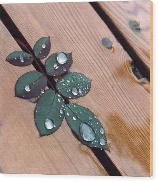 Summer Rain Wood Print by Stephen Prestek
