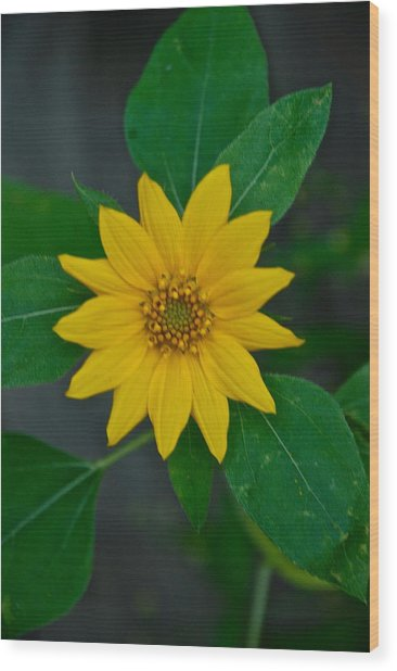Summer Sun Wood Print by Elmer Baez