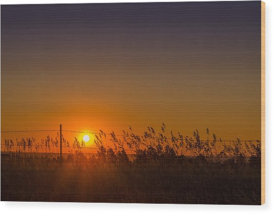 Summer Sunrise On The Plains Wood Print