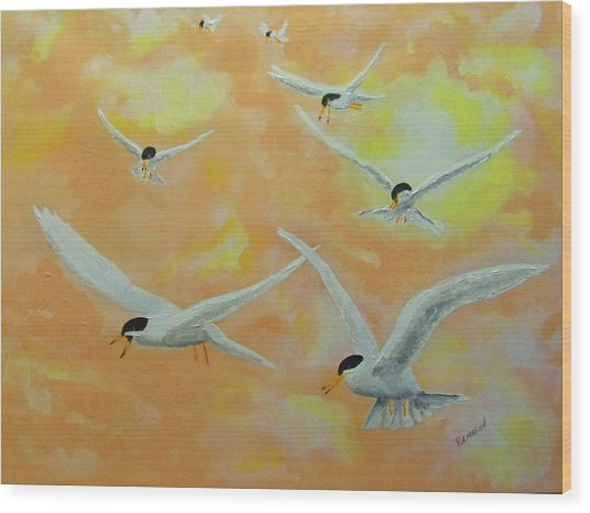 Summer Terns Wood Print by Rich Mason