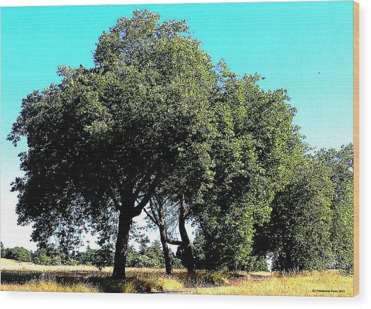Summer Trees Wood Print