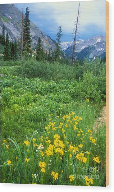 Summer Vista Near Durango Wood Print