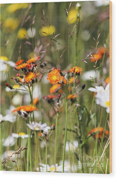 Summer Wildflowers Wood Print
