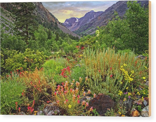 Summer Wildflowers In Lundy Canyon Wood Print
