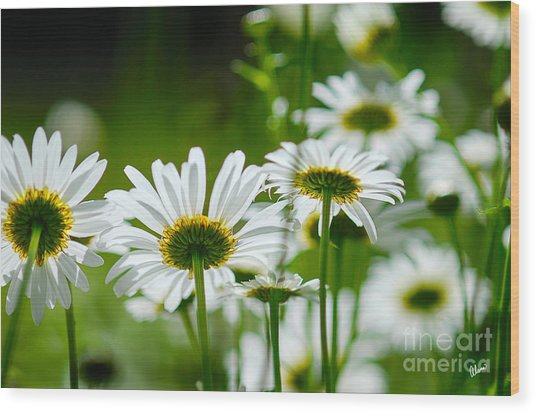 Summer Time Daisys Wood Print