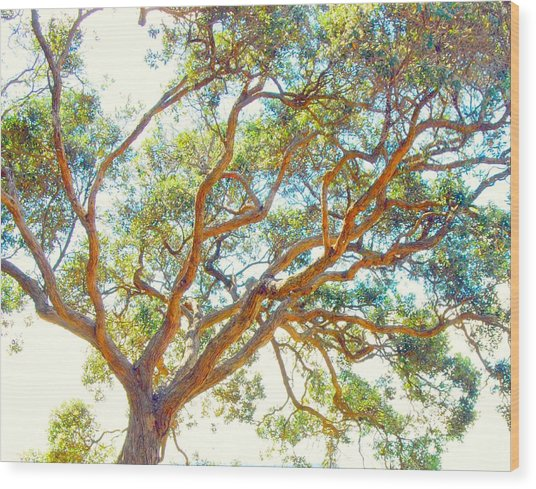 Wood Print featuring the photograph Summertime Tree by Jocelyn Friis