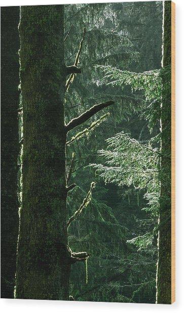 Sun After Rain Wood Print by Kim Lessel