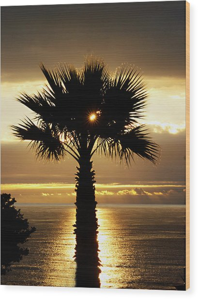 Sun And Palm And Sea Wood Print