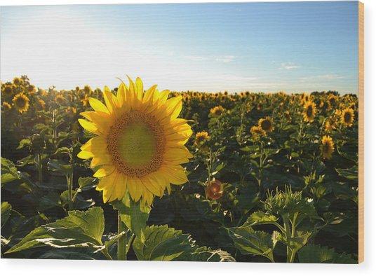 Sun And Sunflower 2  Wood Print