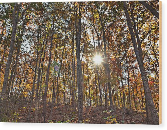 Sun Beams Dance In Autumn Trees Wood Print