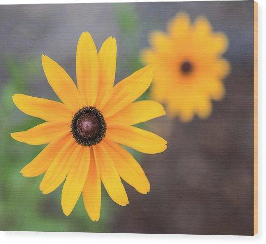 Sun Daisy Wood Print