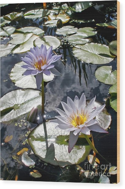 Sun-drenched Lily Pond         Wood Print