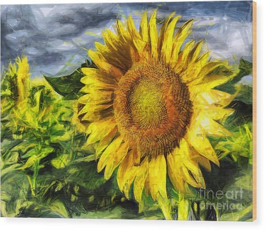 Sunflower Drawing  Wood Print