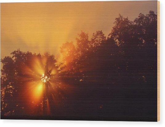 Sun Fog Trees-1 Wood Print