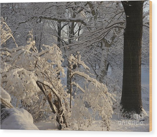 Sun On Snow Covered Branches Wood Print
