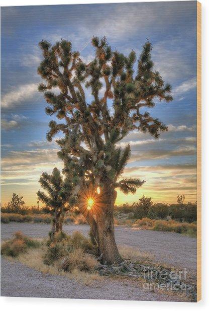 Sun Rays Through A Joshua Tree Wood Print by Eddie Yerkish