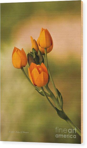 Sun Star Flower Wood Print