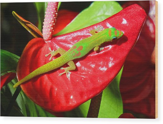 Sunbathing Gecko Wood Print