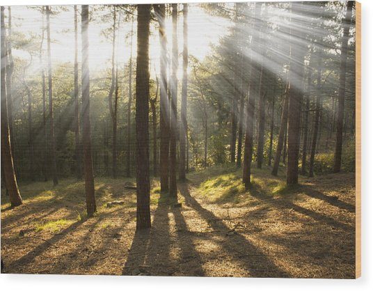 Sunbeams Through The Trees Wood Print by Paul Madden