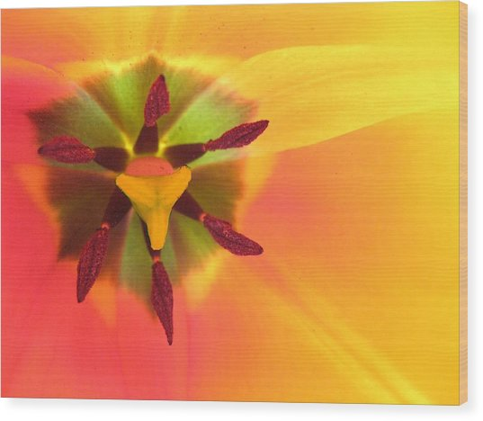 Sunburst 2 Wood Print