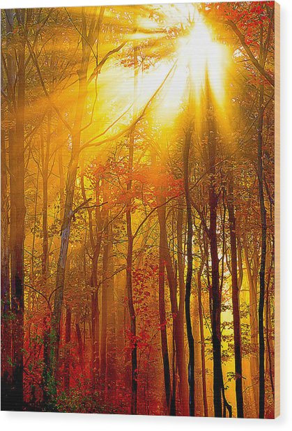 Sunburst In The Forest Wood Print