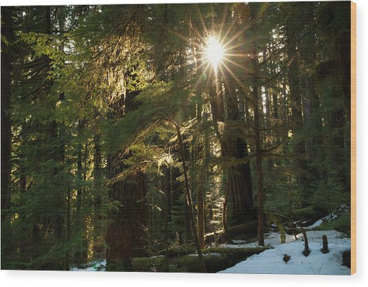 Sunburst In The Rainforest, Olympic Wood Print
