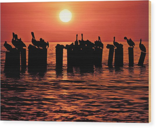 Sundown With Pelicans Wood Print