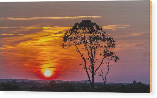 Sundown With Tree Wood Print
