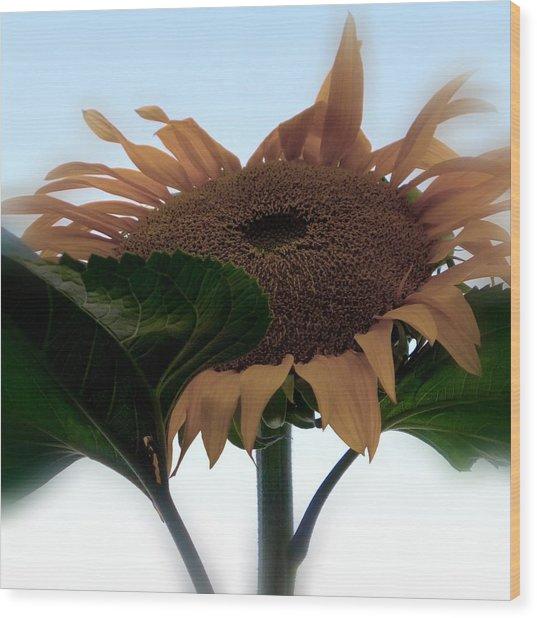 Sunflower 4 Wood Print