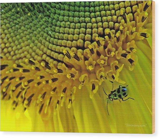 Sunflower And Beetle Wood Print