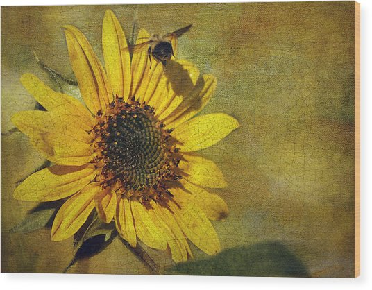 Sunflower And Bumble Bee Wood Print