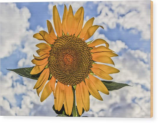 00008 Sunflower And Clouds Wood Print