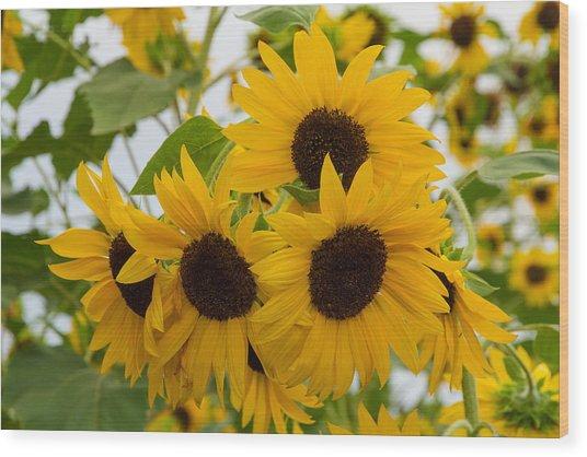 Sunflower Bouquet Wood Print