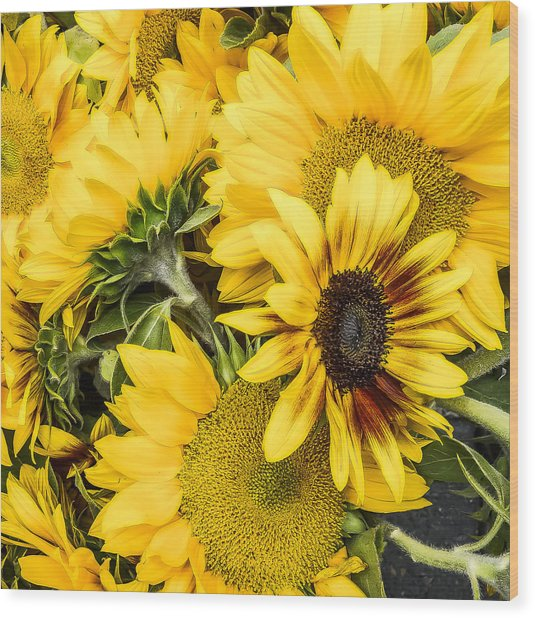 Sunflower Glow Wood Print