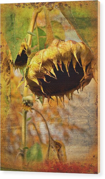 Sunflower Wood Print by Gynt
