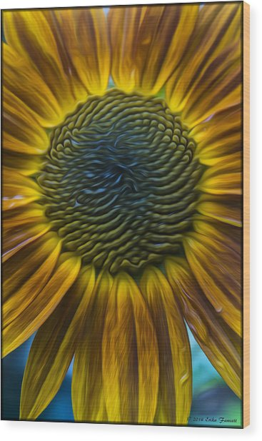 Sunflower In Rain Wood Print