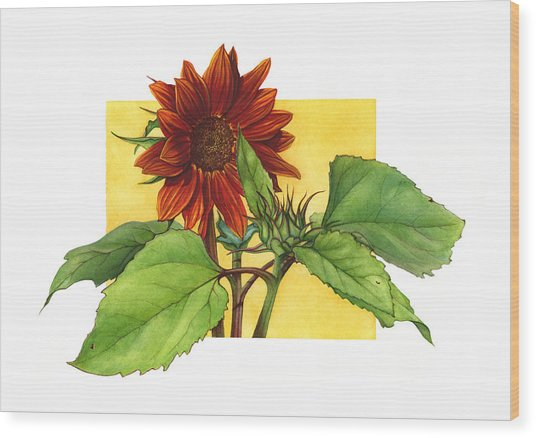 Sunflower In Red Wood Print by Suzannah Alexander