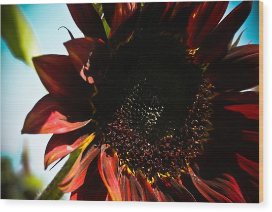 Sunflower Wood Print by Joel Loftus