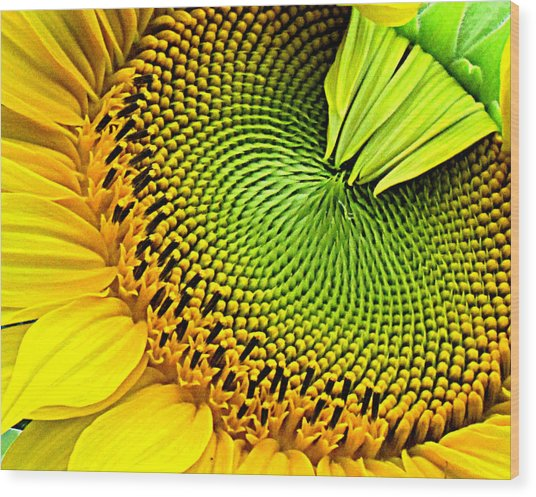 Sunflower Kaleidescope Wood Print