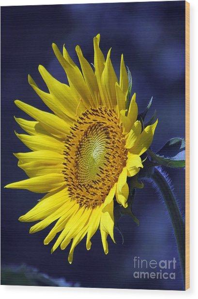 Sunflower On Blue Wood Print