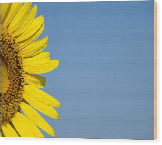 Sunflower Wood Print by Paige Sims