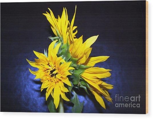 Sunflower Portrait Wood Print