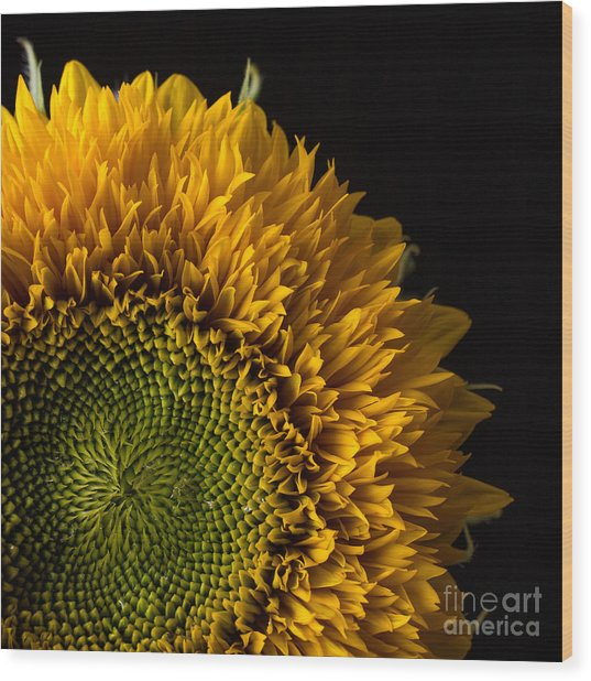 Sunflower Square Wood Print