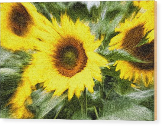 Sunflower Study 3 Wood Print by Mitchell Brown