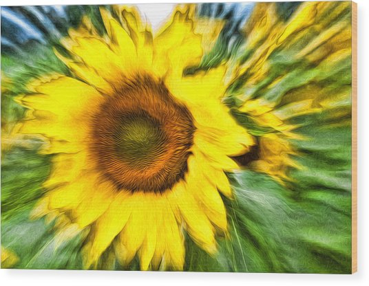 Sunflower Study 4 Wood Print by Mitchell Brown