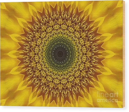 Sunflower Sunburst Wood Print by Annette Allman