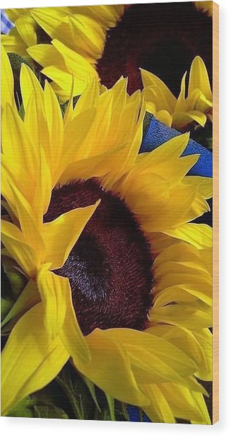 Sunflower Sunny Yellow In New Orleans Louisiana Wood Print