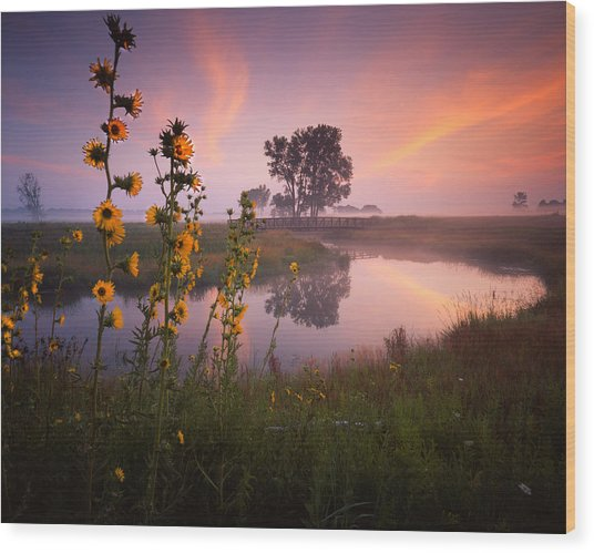Sunflower Sunrise Wood Print