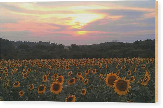 Sunflower Sunset Wood Print by Dawn Vagts