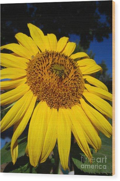 Sunflower Visitor Series 3 Wood Print
